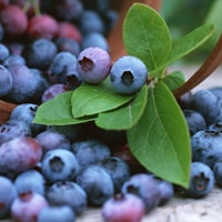 Shakeology nutrition facts: Bilberries